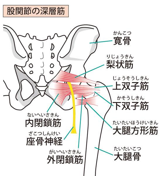 股関節の深層筋